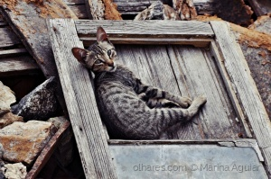 /Gato que vives na rua (ler)