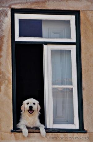 /O cão curioso (ler)