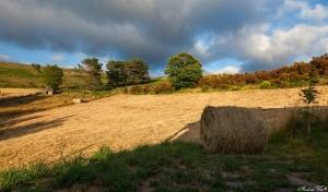 /fim de ciclo no prado