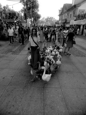 /Follow me, carneirada