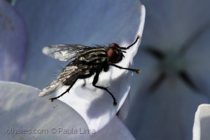 /The fly