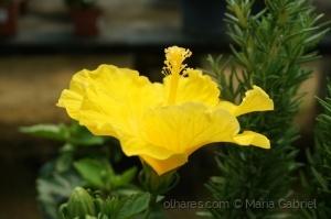 /Flor amarela.!!!