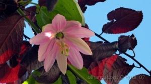 /Flor e folhas