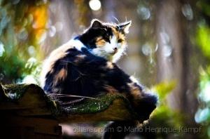 /Tem uma gata no telhado !