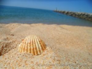 Macro/Praia