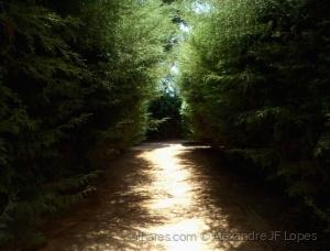 Paisagem Natural/Caminho Secreto