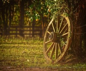 /A velha roda de madeira !