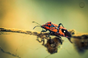 Macro/portrait of an insect in flee