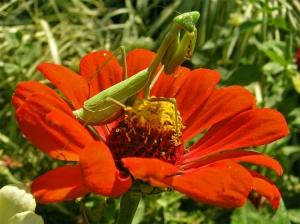 Paisagem Natural/Hábitat: Flores