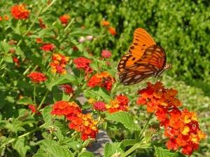 Paisagem Natural/Hábitat: Flor Lantana Camara