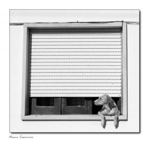 Animais/Cão com Sonhos.
