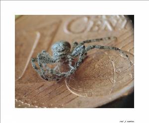 /exp em macro a aranha ...