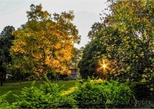 Paisagem Natural/Por entre as folhas !