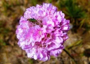 Macro/Os insectos sabem (ler sff)