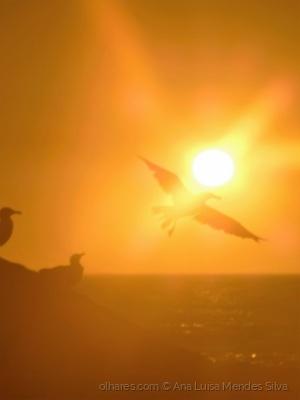 /Gaivota ao pôr do sol