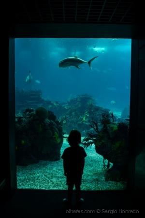 Animais/Uma Janela para o Mar