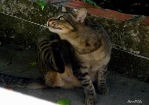 /O felino