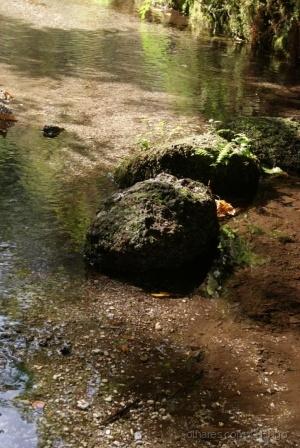 Paisagem Natural/Natureza em tempo de verão