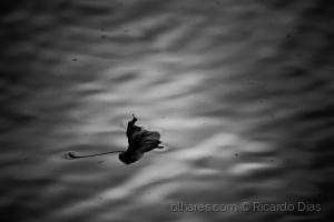 /...flutua, apenas...