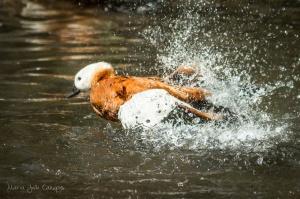 /Splash