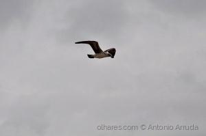 /Aves XXX