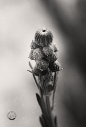 Macro/cocoons. nature is full of promise.
