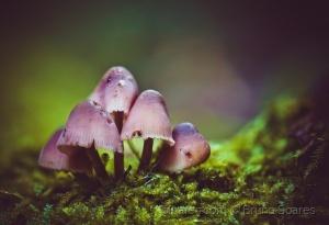 /Cogumelos