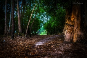 Paisagem Natural/Mystery