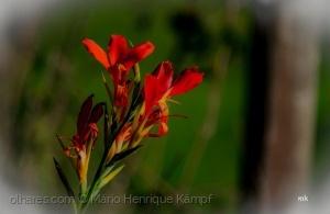/Uma simples flor do campo !