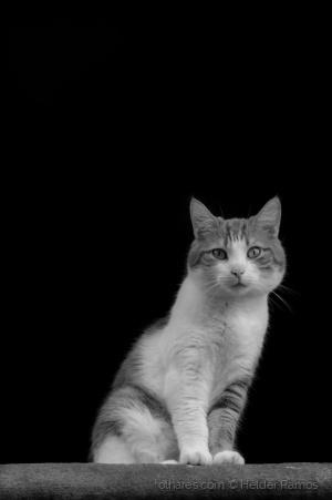 Animais/Eu acho que vi um gato! ... Eu vi! Eu vi!!!