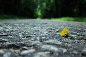 Outros/A flor de alcatrão