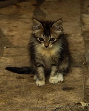 """/""""O gato nunca é comum"""""""