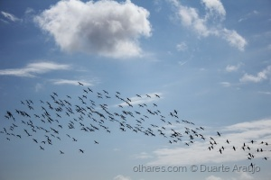Outros/Em voo