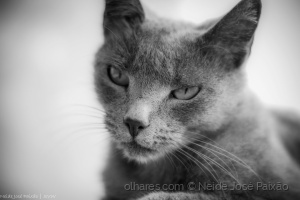 /Fifi in black and white