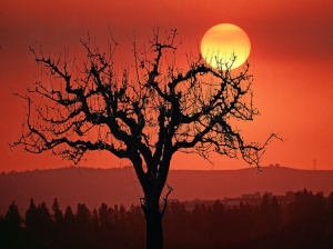 /Árvore em silhueta