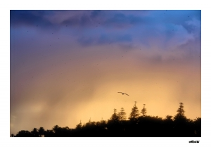 Paisagem Natural/...gaivotas em terra...