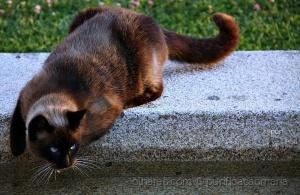 /Dia do animal!!