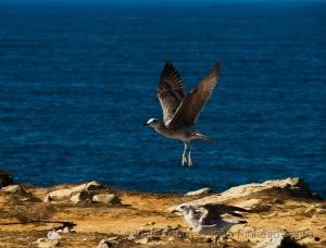 /Dia Do Animal(Que o Homem vos permita voar e não s