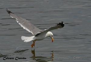 /Se uma gaivota ................
