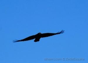 /O voo do corvo.....(pf. ler desrição)