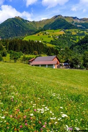 /Alpes floridos