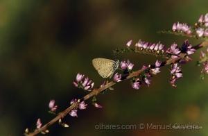 /My little butterfly...
