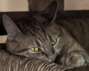 /Os olhos da gata