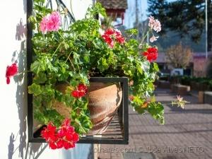 Outros/a jardineira..