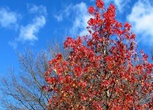 /Outono é outra primavera...