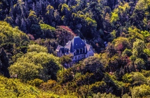 /House in the forest