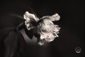 Paisagem Natural/colher, em flor, o silêncio que a noite semeou.