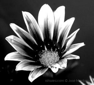 /apenas flor