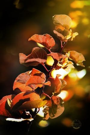 Paisagem Natural/Outubro Outono