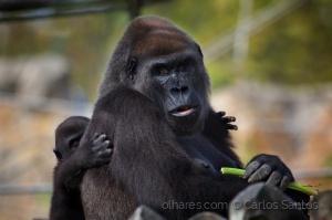 /Zoo de Lisboa - Carinho de filho